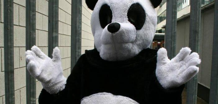 Panda's knuffelen!? De meest bizarre beroepen