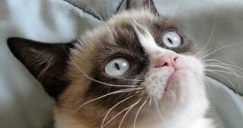 Fulltime katten knuffelen voor €25.000 euro per jaar?